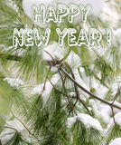 Happy New Year - Pine tree branched and snow Royalty Free Stock Image