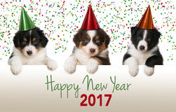 Happy new year puppies. With hats royalty free stock photo