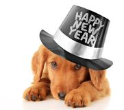 Happy New Year puppy. Shy puppy wearing a Happy New Year top hat Royalty Free Stock Images