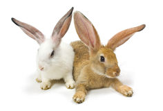 Happy New Year of rabbit Royalty Free Stock Photos