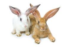 Happy New Year of rabbit Stock Photos