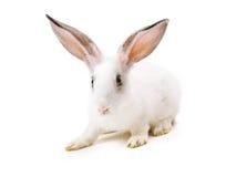 Happy New Year of rabbit Royalty Free Stock Photos
