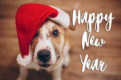 Happy new year text, seasonal greetings card sign.  cute dog in Stock Image