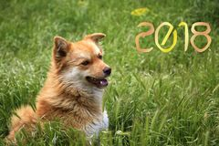Happy New Year 2018! year of the yellow dog!. Greeting card with the New Year 2018. An amusing sweet yellow dog is a symbol of 2018 on the eastern calendar stock photo