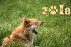 Happy New Year 2018! year of the yellow dog!. Greeting card with the New Year 2018. An amusing sweet yellow dog is a symbol of 2018 on the eastern calendar stock photos