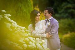 Happy newlywed couple hugging near white flower bush.  Stock Photo