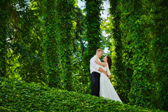 Happy newlywed couple wedding day. Groom bride ivy Stock Images