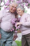 Happy old couple. On the flowering  apple-tree  background Royalty Free Stock Photography