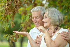 Happy old people. Beautiful happy old people in the park Royalty Free Stock Images