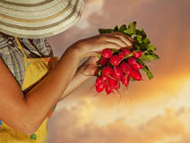 Happy old woman gardener Royalty Free Stock Images