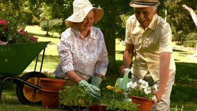 Happy older couple gardening together stock video footage