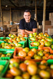 Happy organic farmer over tomatoes boxes in storage before prepa Royalty Free Stock Photo