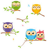 Happy Owl family sit on tree Royalty Free Stock Images