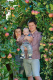 Happy parents with child in apple garden. Happy parents father, mother and their child in apple garden. Outdoor fun for children. Healthy nutrition. Everyone is Stock Photography