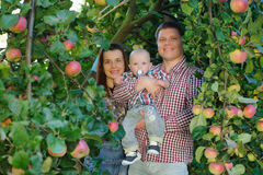 Happy parents with child in apple garden. Happy parents father, mother and their child in apple garden. Outdoor fun for children. Healthy nutrition. Outdoor Royalty Free Stock Photos