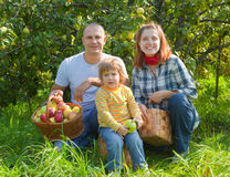 Happy parents and child with   harvested apples Stock Images