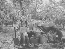Happy parents and child with   vegetables. Happy parents and child with  harvested vegetables in garden Royalty Free Stock Image