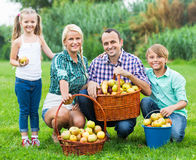 Happy parents and children with apples. Happy parents and children holding basket with apples outdoors Stock Image