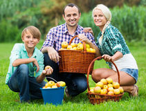 Happy parents and teenager holding  apples. Happy parents and teenager  holding basket with apples outdoors Stock Image