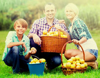 Happy parents and teenager holding  apples. Happy parents and teenager  holding basket with apples outdoors Stock Images