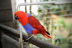 Happy parrot. In Singapore Zoo Royalty Free Stock Images