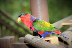 Happy parrot. In Singapore zoo Stock Image
