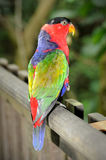 Happy parrot. In Singapore zoo Stock Images