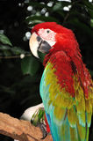 Happy parrot. In Jurong Bird Park, Singapore Royalty Free Stock Photo