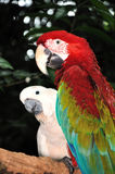 Happy parrot. In Jurong Bird Park, Singapore Royalty Free Stock Image
