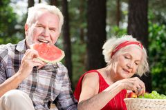 Happy pensioner eating watermelon and his wife enjoying grapes. Fresh fruit. Cheerful senior man smiling and eating delicious watermelon while his calm wife Stock Image