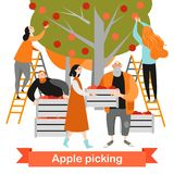 Happy people are picking apples in the garden. Harvest time. Royalty Free Stock Images