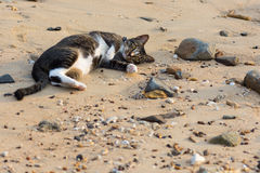 A happy pet cat playing on a sandy beach Stock Photo