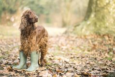 Happy Pet Dog Standing In The Autumn Leaves Stock Images