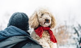 Happy pet and his owner having fun in the snow in winter holiday. Season. Winter holiday emotion. Man holding cute puddle dog with red scarf. Film filter image royalty free stock image