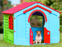 Happy pet sitting in colorful dog house (made from kid playground house) Royalty Free Stock Photo