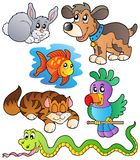 Happy pets collection 1 Royalty Free Stock Image