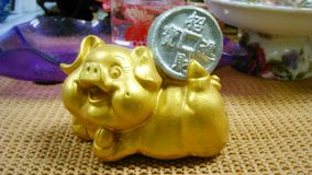 Happy pig with golden coin. Happy pig holding golden coin symbol of wealthy Royalty Free Stock Photo