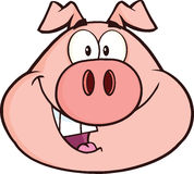 Happy Pig Head Cartoon Mascot Character Royalty Free Stock Image
