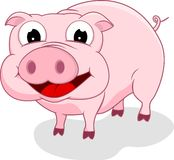 Happy Pig Standing Royalty Free Stock Images