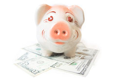 Happy Piggy Bank With Cash Royalty Free Stock Photo