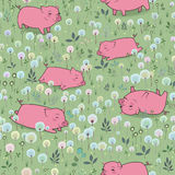 Happy Pigs on the blossoming field Stock Photography