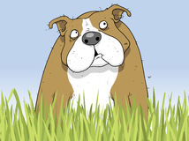 Happy Pitbull Dog In Garden Cartoon Character Illustration Royalty Free Stock Photo