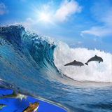Happy playful dolphins jumping on breaking wave Stock Photo