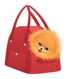 Happy Pomeranian spitz Royalty Free Stock Photo