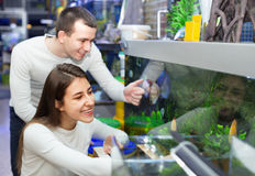 Happy positive smiling customers selecting tropical fish Stock Photos