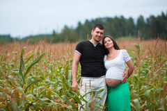 Happy pregnant couple on cornfield Stock Images