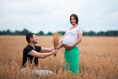 Happy pregnant couple on oat field Royalty Free Stock Image