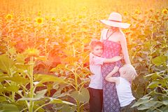 Happy pregnant mother hugging two little sons on sunny field of blooming sunflowers stock images