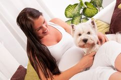 Happy pregnant woman with west highland white terrier relaxing Royalty Free Stock Photo
