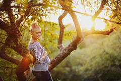 Young  pregnant woman in garden during sunset Stock Images